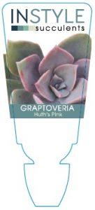 Grapto-Huths-Pink
