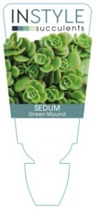 Sedum-Green-Mound