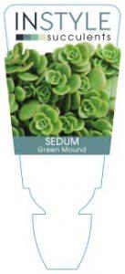 Sedum-Green-Mound