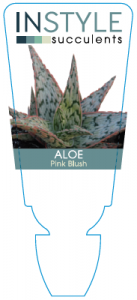aloe-pinkblush