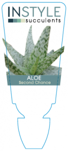 aloe-secondchance