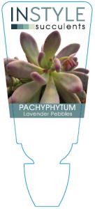 Pach Lavender Pebbles