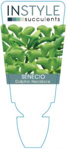 Senecio Dolphin Necklace