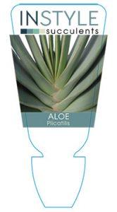 succulent-instyleAloe-plicatilis