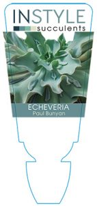 succulent-instyleEcheveria-Paul-Bunyan