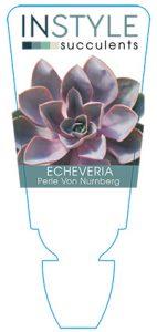 succulent-instyleEcheveria-Perle-Von-Nurnberg