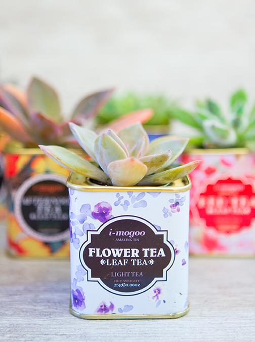 Vintage Tea Tin Succulents