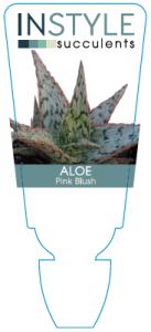 aloe-pinkblush