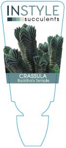 crass-buddhastemple