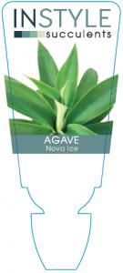 Agave Nova Ice
