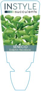 Senecio Dolphin Necklace