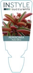 Peperomia Ruby Glow